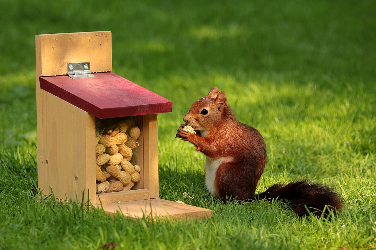 are you a spender or a squirrel?